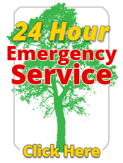 24 hour emergency tree removal button