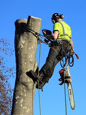 atlanta tree removal services