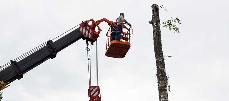 Massive tree removal jobs are typically crane assisted