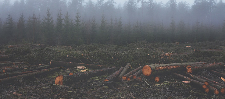 Deforestation caused by logging industry