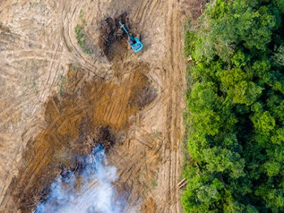 Deforestation of rainforests for farmland and cattle ranches