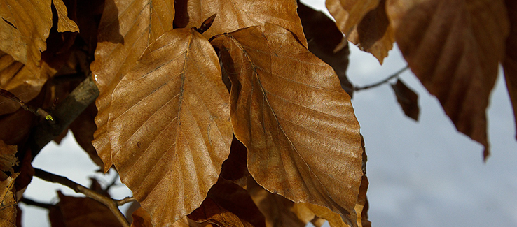 Tree foliage dying off season may indicate more serious problems.