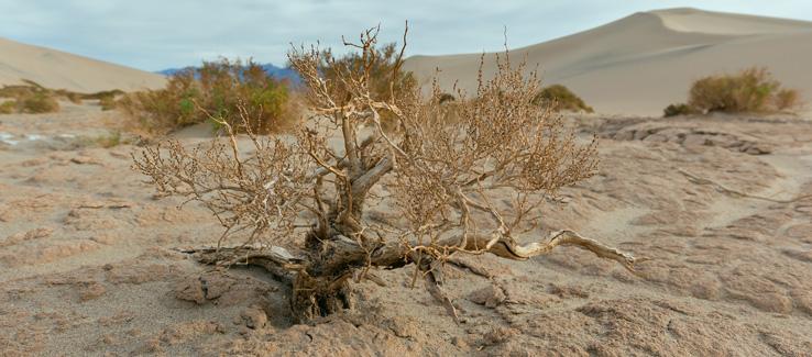 Tree service Atlanta Ga screwbean mesquite