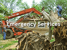 emergency tree removal atlanta