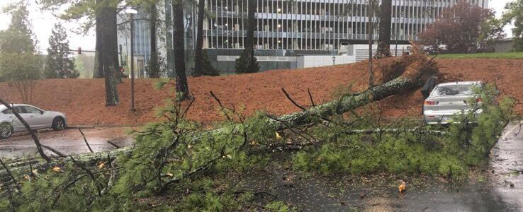 emergency tree removal dunwoody