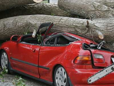 Emergency tree removal tree fall on parked car