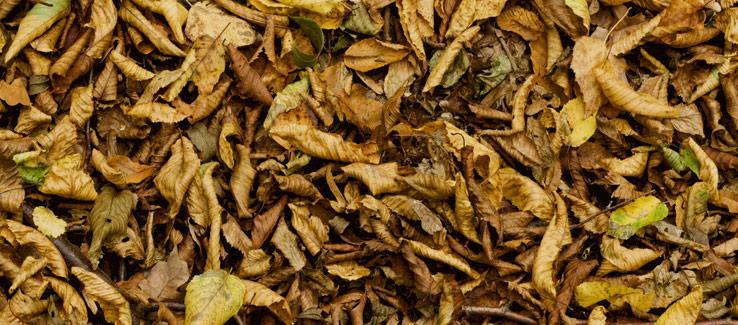 Fallen leaves decay to fertilize trees