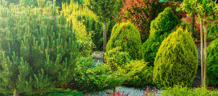 Home garden with trees and shrubs