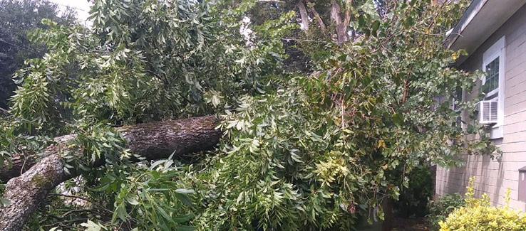 Fallen tree on house Atlanta Ga