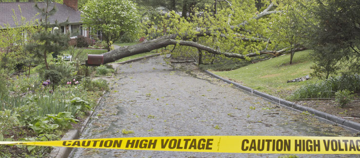 Tree fell through residential power lines