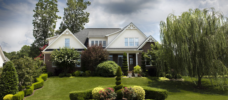 Shrubs around trees in landscaped yard