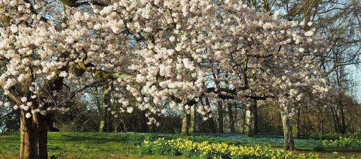 Planting flowering trees in Atlanta Ga landscape