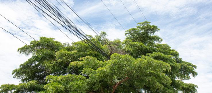 Public trees growing into power lines in Atlanta Georgia