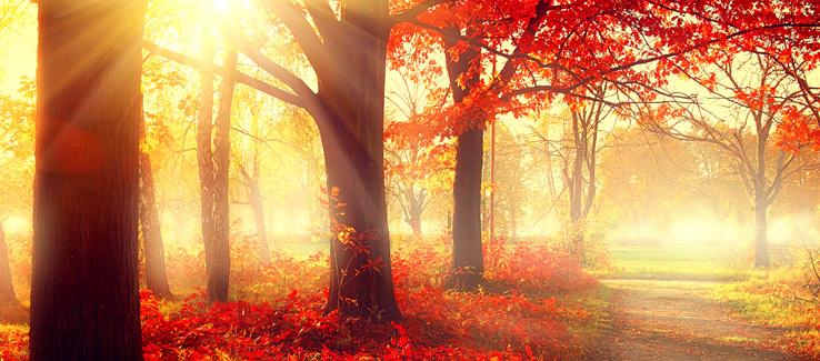 Mid story red maple tree Atlanta Ga