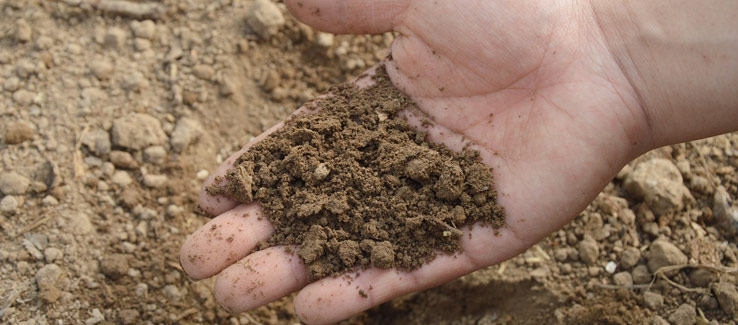 Soil pH level and fertilization