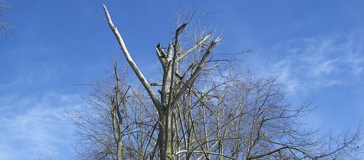 Broken tree limbs after severe weather events