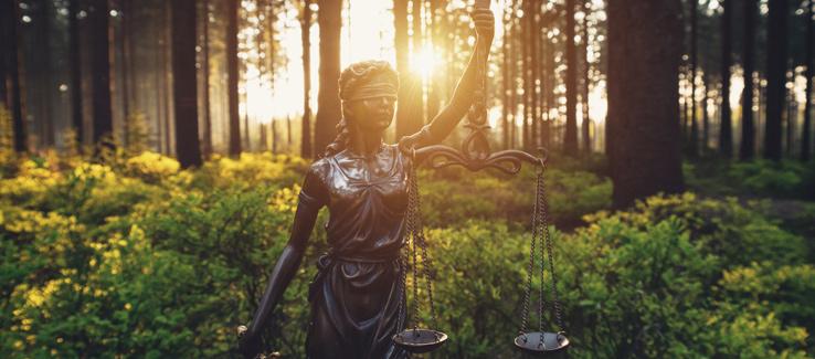 Tree removal recompense and fines Atlanta Ga