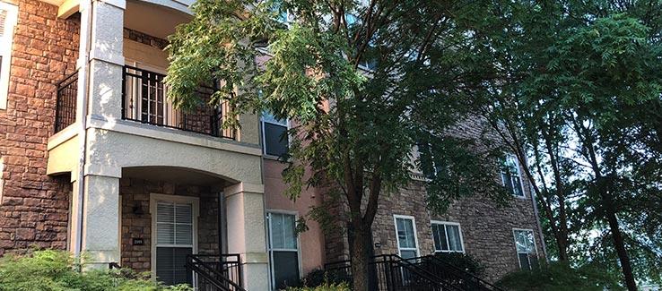 Tree location near building steps and sidewalk