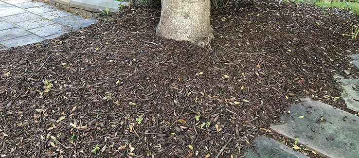 Tree care includes the seasonal mulching of trees to protect and nurture roots