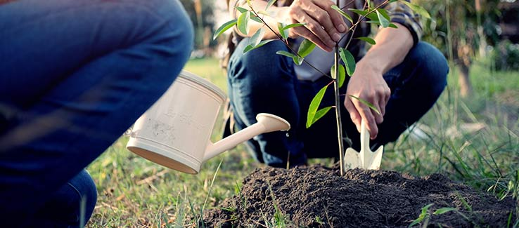 Tree care begins with proper planting and soil condition