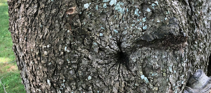 Tree compartmentalization branch pruning 20 years after the cut
