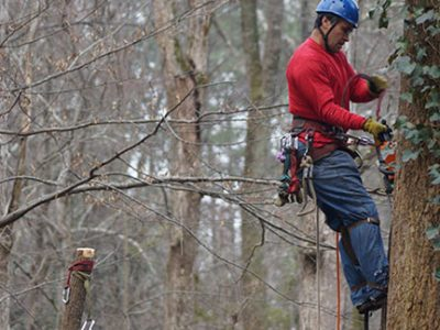 emergency tree removal atlanta ga