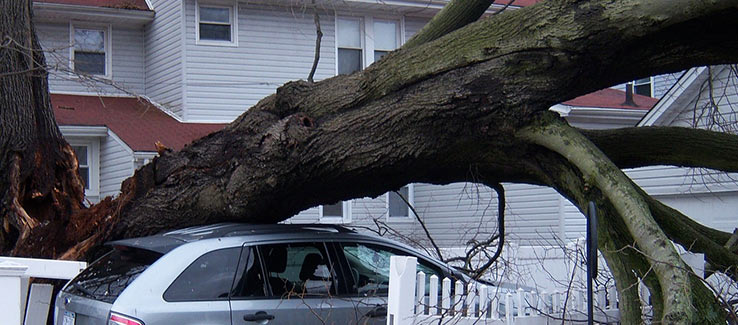 Damage caused by falling trees covered by comprehensive insurance policy