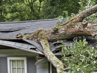 Tree fell on house emergency Atlanta Ga