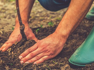 atlanta ga tree planting