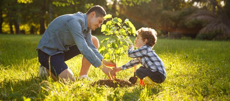 Planting a tree Atlanta Ga backyard landscape