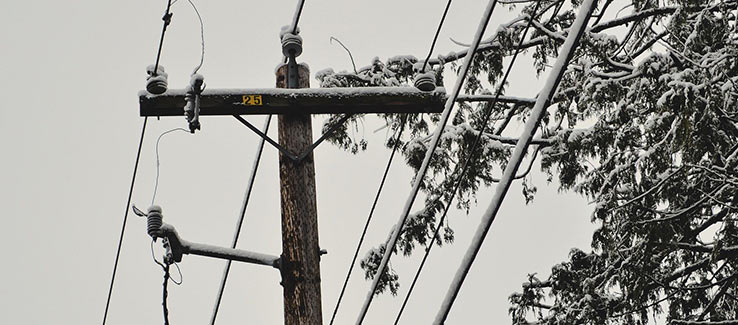 Trees must be pruned or removed when they interfere with power lines