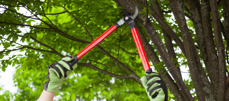 Tree pruning and crown thinning