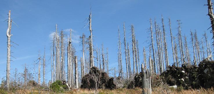 Global warming tree removal Atlanta