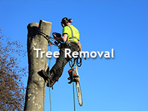 Tree Removal Atlanta