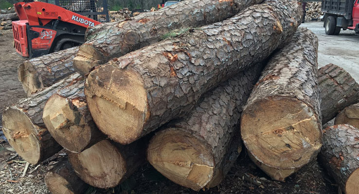 tree removal in dunwoody georgia