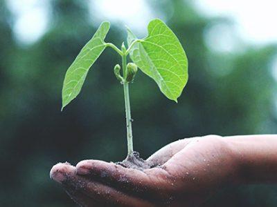 tree sapling plant