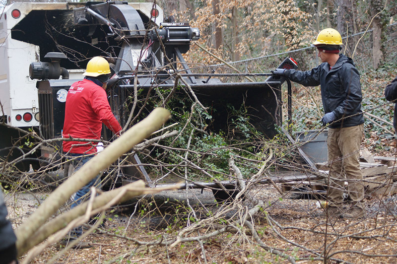 tree cutting service atlanta ga