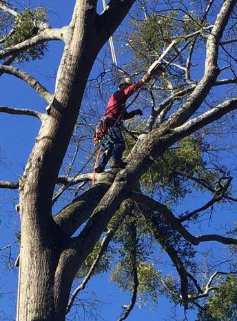 tree service dunwoody