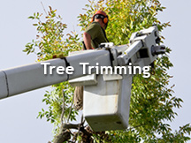 Tree Trimming Atlanta