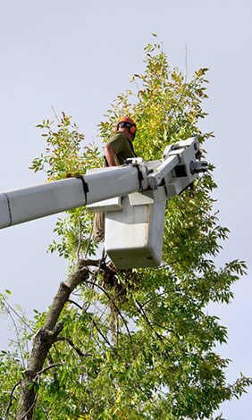 tree trimming techniques atlanta