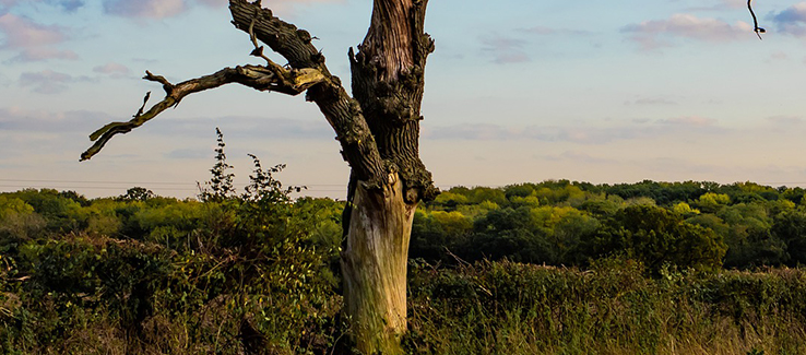 Tree trunk problems can show up as damaged or sloughing bark