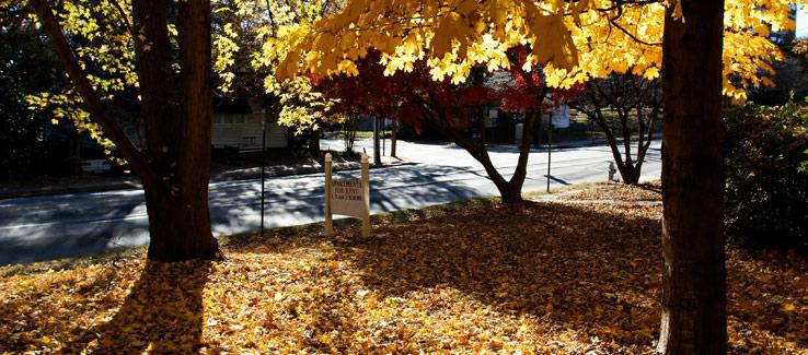 Residential trees in front yard Atlanta Ga