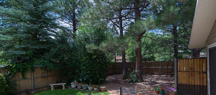 Mature trees in backyard landscape