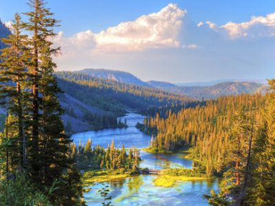 Trees in the wilderness help maintain our hospitable environment