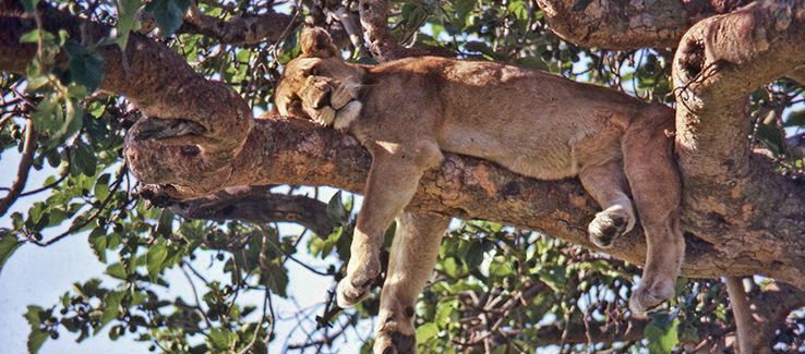 Trees provide refuge and shelter for many animal species